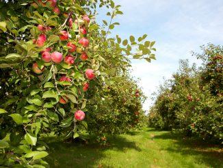 cotidianul_agricol, pomi_fructiferi